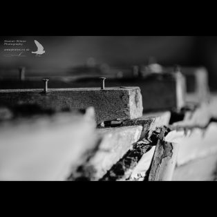 Disintegrating wood on an abandoned boat exposes the screws