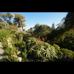 Beautiful gardens at Tresco Abbey