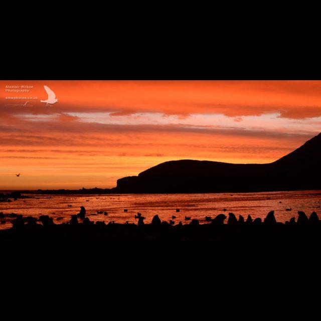 Bird Island beach sunset